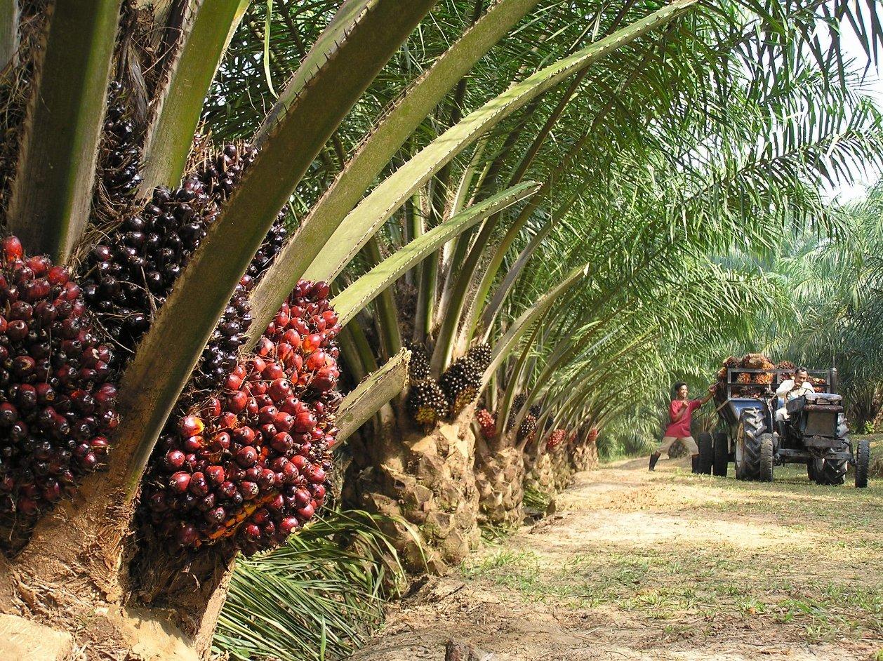 Масленичная пальма