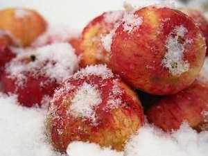 Сыроедение зимой: заготовки, рецепты