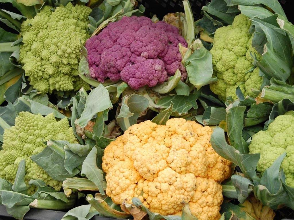 цветная капуста выращивание фото ниже частота