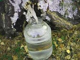 Лечебные свойства березового сока