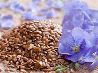 Вред и польза льняного семени
