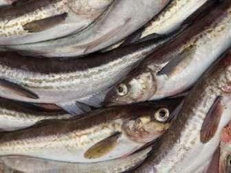 Вред и польза рыбы