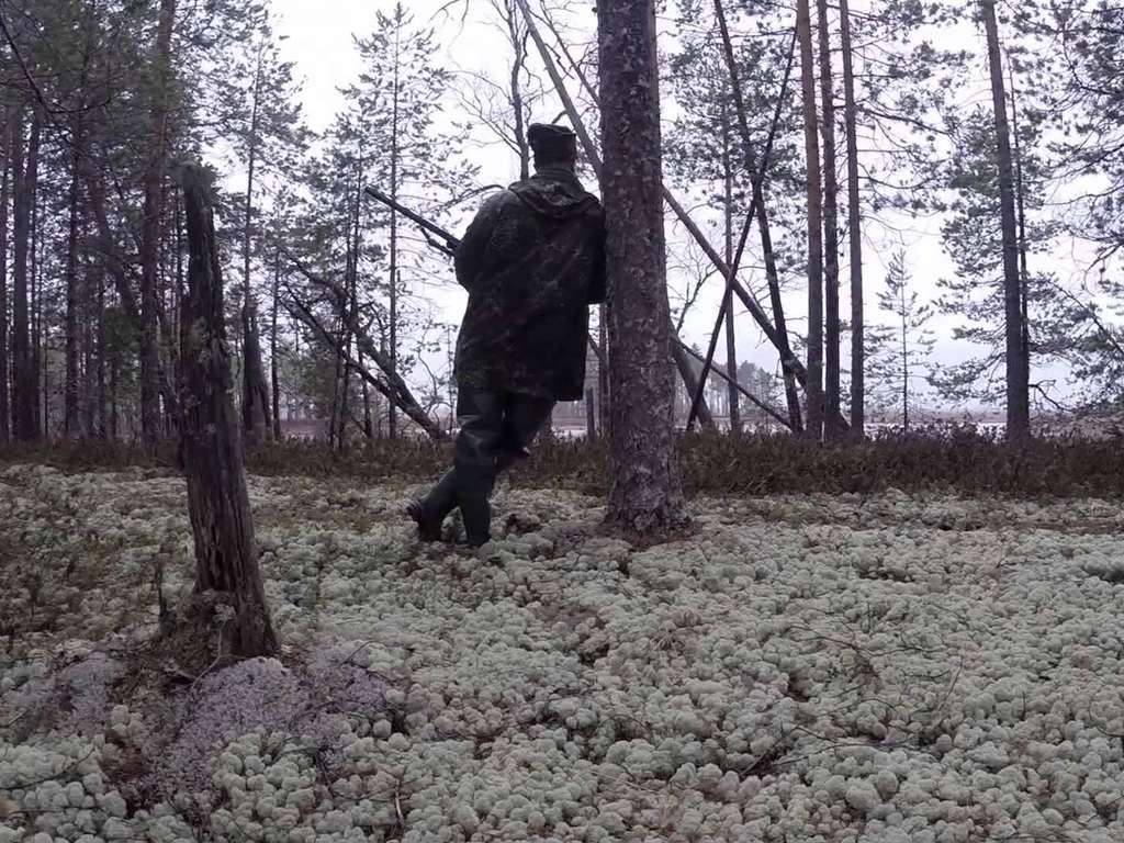 Охота на гуся в Архангельске и Архангельской области 2018
