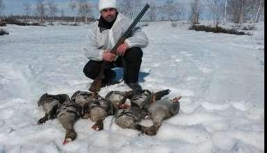 Охота на гуся на Ямале (ЯНАО) 2018